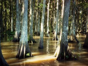 Atchafalaya Basin Wilderness Bike Trail
